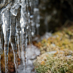 ice-and-moss